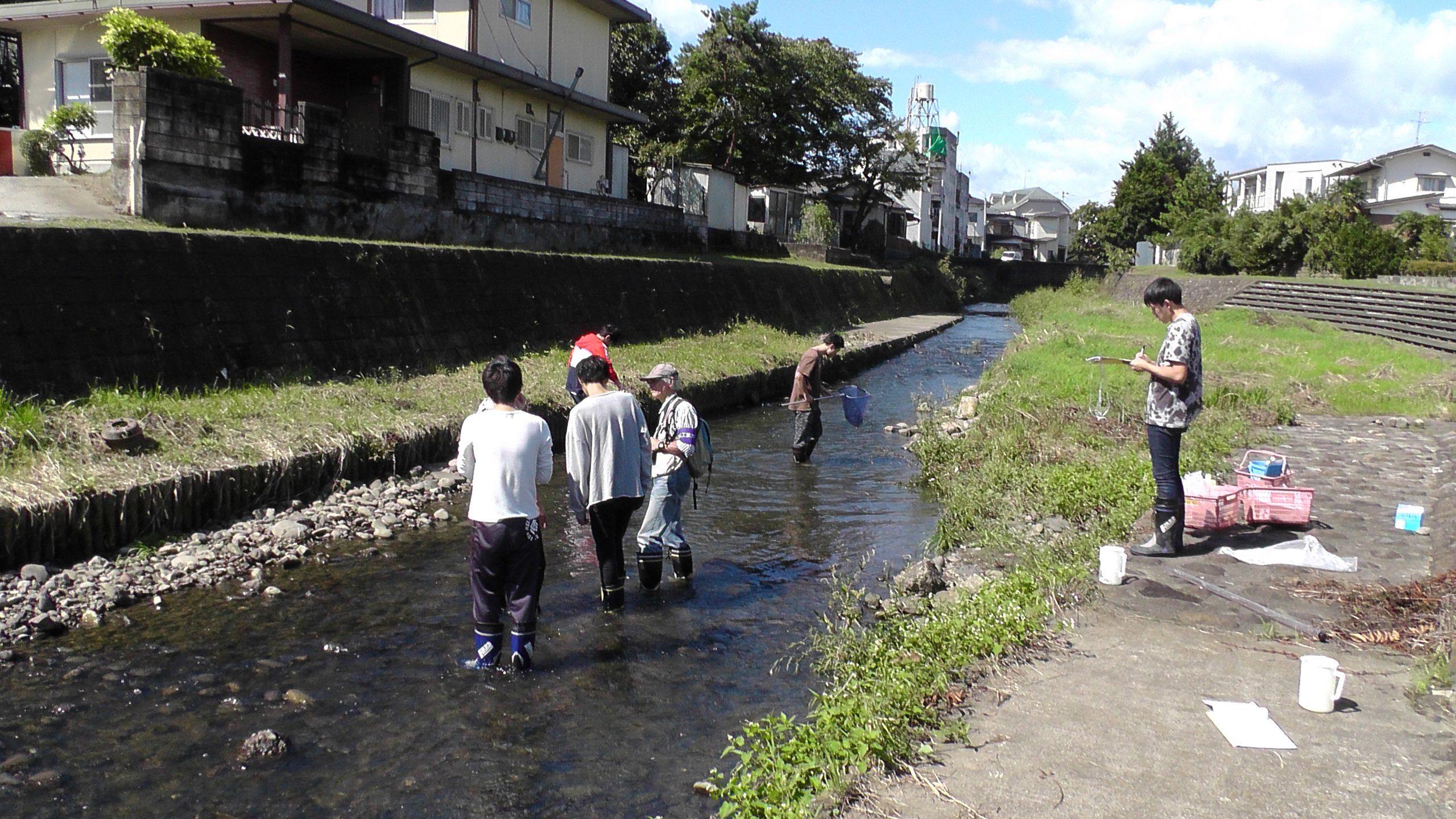 都市小河川の調査(梅田川)