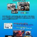 漂流・瓦礫から甦った「動物」「植物」たち:漂流物アート(IWANUMA COAST AREA)
